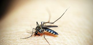 National Dengue Day 2018